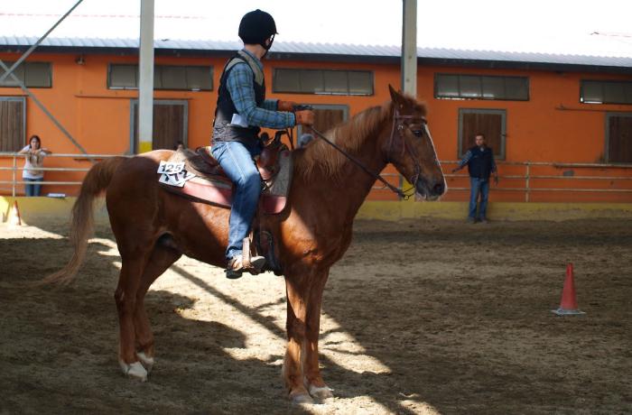 Centro equestre pegaso associazione sportiva dilettantistica